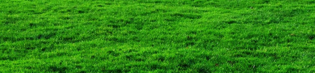 Bluescapes lawn Care | Lawn Care Dallas, GA